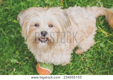 Cute Little White Doggy Smiling At The Camera