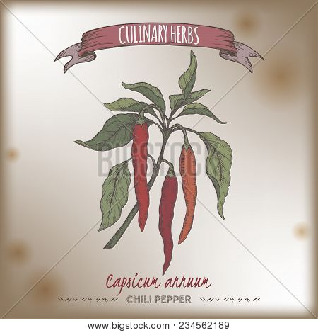 Cayenne Pepper Aka Hot Chili, Capsicum Annuum Hand Drawn Color Sketch. Culinary Herbs Collection. Gr
