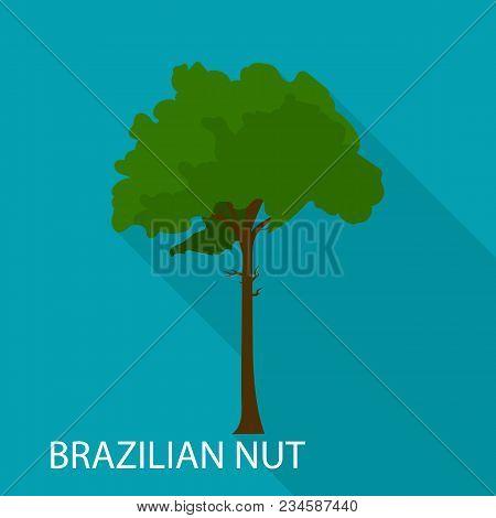 Brazilian Nut Icon. Flat Illustration Of Brazilian Nut Vector Icon For Web