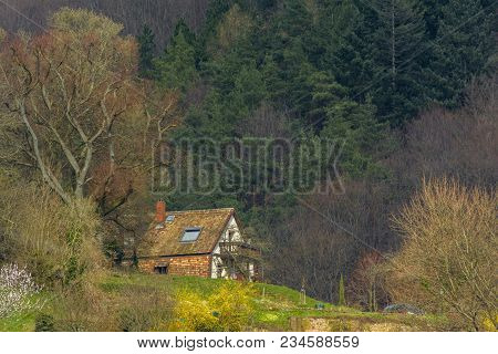 Holiday Cottage In The Middle Of The Forest, On The Hill Of Heidelberg City, Baden Wurttemberg, Germ