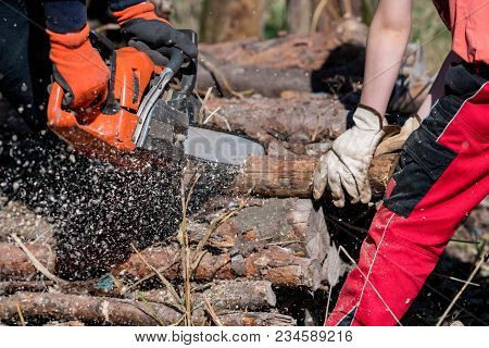 Man Saws Firewood With A Red Chainsaw
