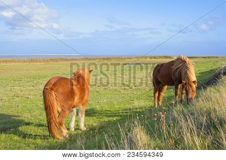 Two Horses On The Island