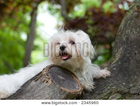 Puppy In A Tree