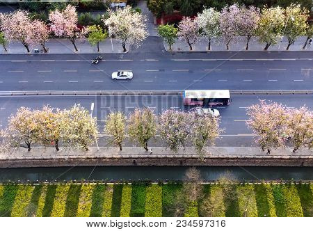 Overlooking the bus and car driving on a highway with flourishing orchid tree(Phanera purpurea) by the roadside in Gongye road,Fuzhou,Fujian,China