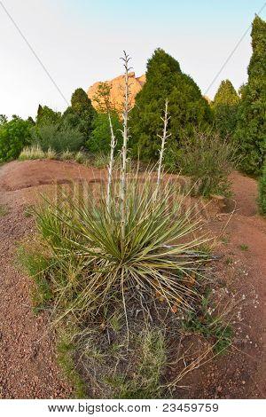 spiky plant in the desert