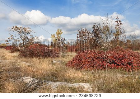 Characteristic Vegetation In The Trieste Karst In Autumn