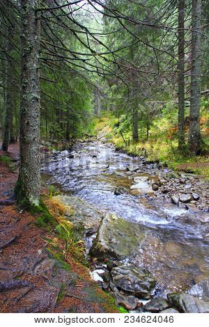 Mountain Streams Flow Into One River After Rain. Fast Mountain Brooks Make River. Shallow Mountain B