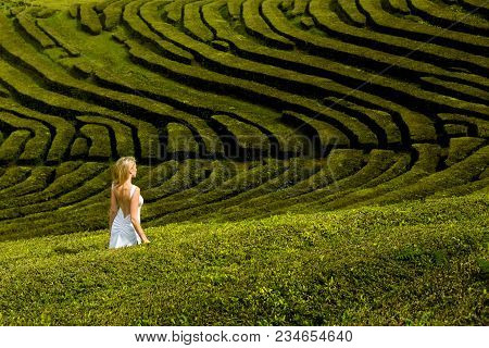 Beautiful And Sexy Blonde Woman In White Long Dress Walks Along The Green Tea Plantation