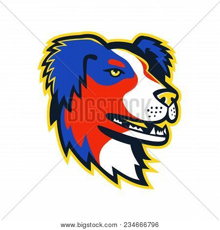 Mascot Icon Illustration Of Head Of An Australian Shepherd Dog Or Aussie, A Medium Sized Breed Of He