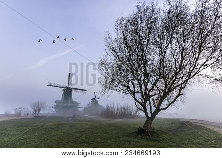 A Big Tree In Front The Sawmill In The Foggy Morning At Zaanse Schan, Nearby Amsterdam, Netherlands