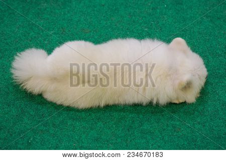The White Dog Lies On Green Grass At Work.