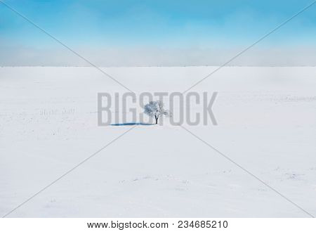 Single tree in a vast snowy landscape with clouds