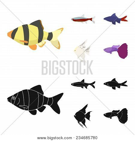 Angelfish, Common, Barbus, Neon.fish Set Collection Icons In Cartoon, Black Style Vector Symbol Stoc