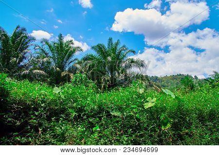 Tropical Jungle Landscape. Dense Bright Green Vegetation Against Blue Sky With Clouds.