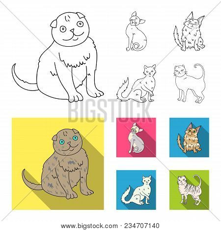 Turkish Angora, British Longhair And Other Species. Cat Breeds Set Collection Icons In Outline, Flat