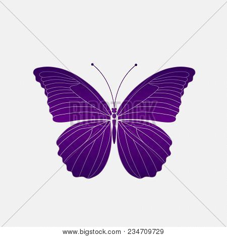 Vector. Abstract Polygonal Butterfly. Silhouette Violet Ultraviolet Butterfly