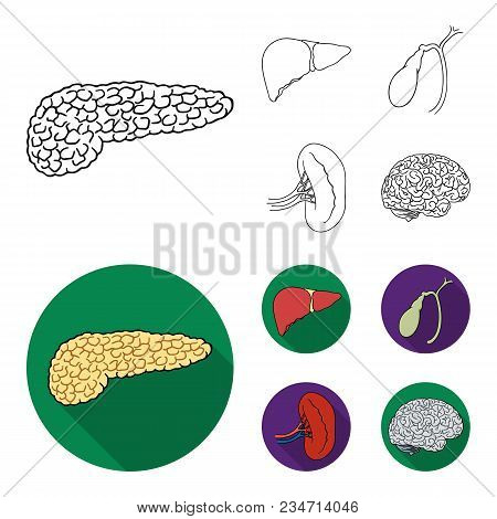Liver, Gallbladder, Kidney, Brain. Human Organs Set Collection Icons In Outline, Flat Style Vector S