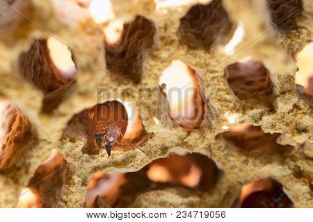Termites Damage Home, Macro Close Up Termites In Anthill