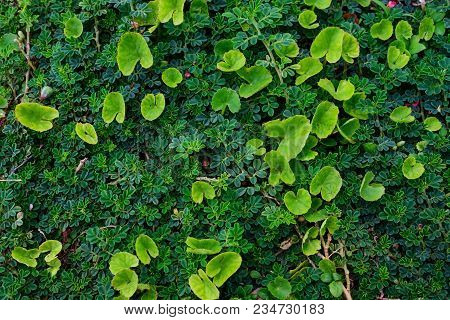 Natural Background With Green Leaves. For Ecological And Eco Friendly Purposes.