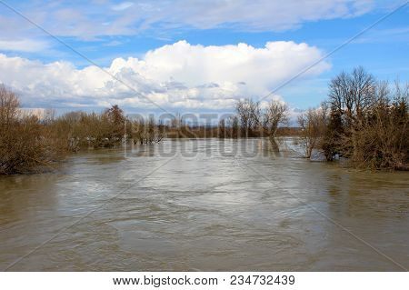 Muddy River During Flood Surrounded With Large Trees Without Leaves And Small Vegetation With Cloudy