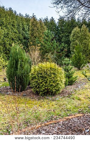 Garden After Winter With Tress And Bushes