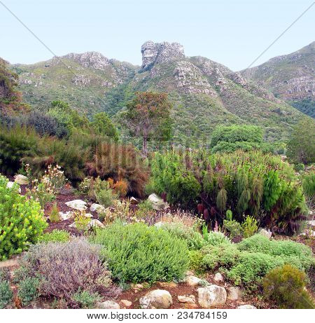 From Kirstenbosch Botanical Gardens, Cape Town, South Africa,  Rocks, Trees And Other Vegetation In
