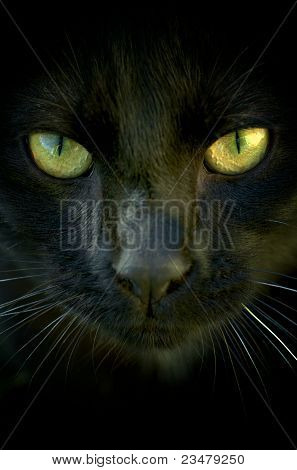 Eyes of a young black cat in the dark poster