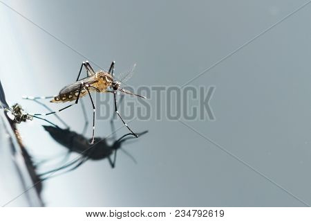 Gnats; Mosquitoes; Larvae,mosquito Larvae In Dirty Water And Young Mosquitoes,instar With Shell Mosq