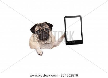 Pug Puppy Dog With Glasses Holding Up Blank Tablet Or Mobile Phone, Hanging On White Banner, Isolate