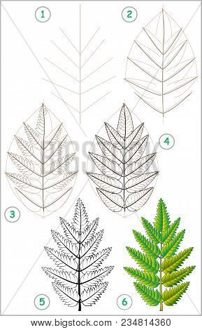 Page Shows How To Learn Step By Step To Draw A Rowan Leaf. Developing Children Skills For Drawing An