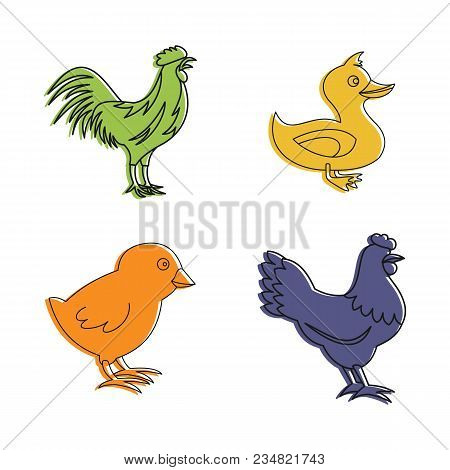 Domestic Bird Icon Set. Color Outline Set Of Domestic Bird Vector Icons For Web Design Isolated On W