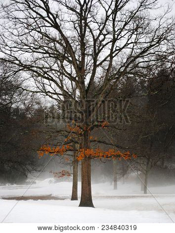 Orange Leaves Cling To A Bare Tree In The Snow And Fog In Winter.