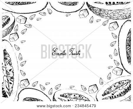 Exotic Fruit, Illustration Frame Of Hand Drawn Sketch Of Honeydew Melon Or Cucumis Melo And Chiverre