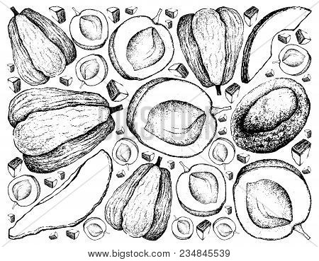 Exotic Fruits, Illustration Wall-paper Background Of Hand Drawn Sketch Apricot And Chayote Or Sechiu