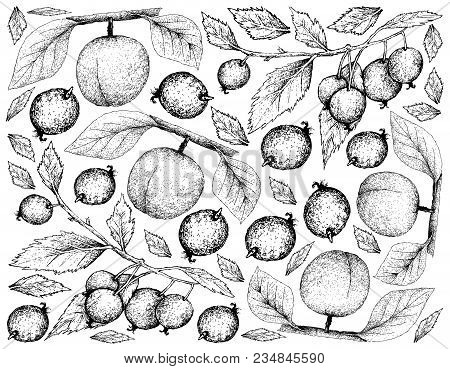 Exotic Fruits, Illustration Wall-paper Background Of Hand Drawn Sketch Apricot And European Nettle T