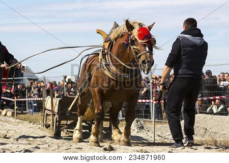 Horses And Their Owners Participate In A Heavy Pull Tournament. The Animals Has To Pull A Load Of Hu