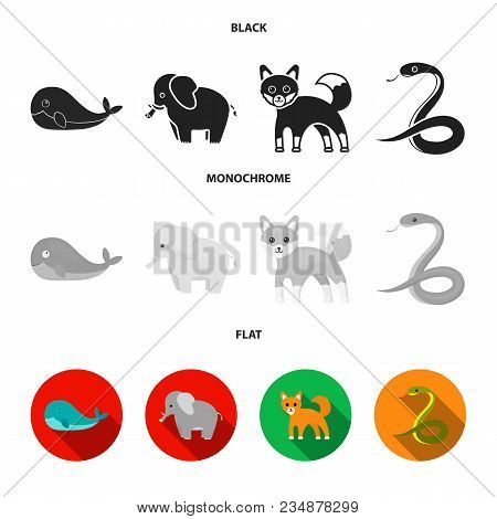 Whale, Elephant, Snake, Fox.animal Set Collection Icons In Black, Flat, Monochrome Style Vector Symb