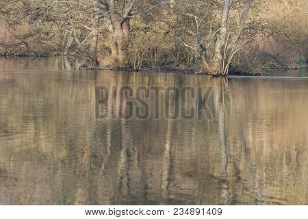 Photo Of Reflections Of Trees In The Water