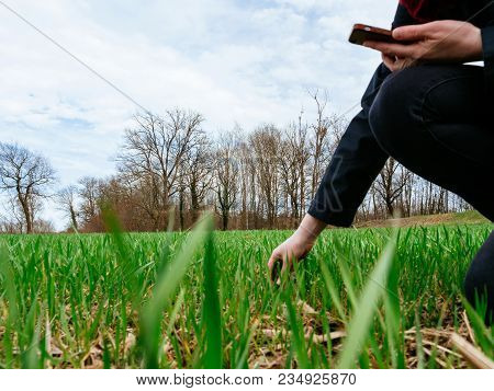 Biologist And Farmer Woman Using Professional Smartphone Device Inspecting The Wheat Plant Harvest O