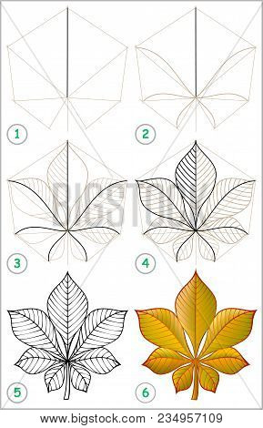 Page Shows How To Learn Step By Step To Draw A Chestnut Leaf. Developing Children Skills For Drawing