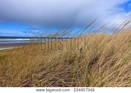 A close up photo of grass on a windy day by the coast near Seaside, Oregon.