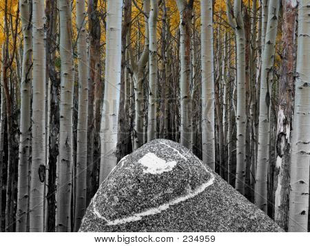 Aspens And Rock