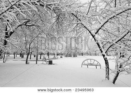 Снегопад в парке