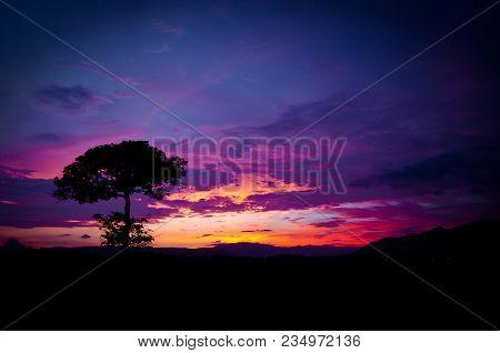 A Single Silhoutte Tree In The Beautiful Sky Sunset
