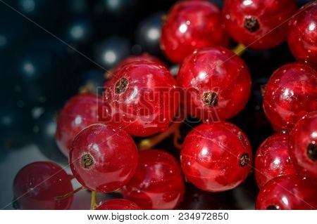 Red Currant Close Up On Theblack Currant Background