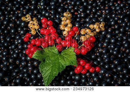 Red And White Or Yellow Currant On The Raw Black Currant Background