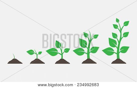 Plants Growing In The Ground. Vector Illustration. Eps 10