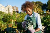 african american woman tending to kale in communal urban garden poster