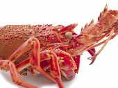 Detail of red lobster isolated on a white background poster
