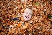 Young child laying buried in a pile of fall leaves laughing with poster